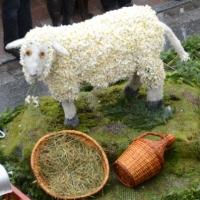 13. Schafe auf Wiese