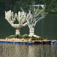 Seelilien (Crinoiden)