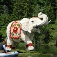 Bootskorso Elefant