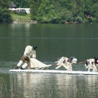 Husky-Schlittenhunde