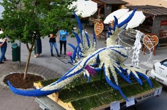 1_Fadenschnecke  Glaucus atlanticus  Blue dragon_AGESA Hans Dostal und Freunde